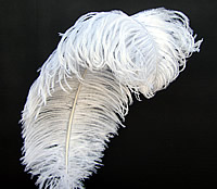 Prime Quality Ostrich Wing Plumes 18-24""